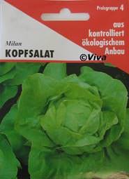 Aries Saatgut Kopfsalat